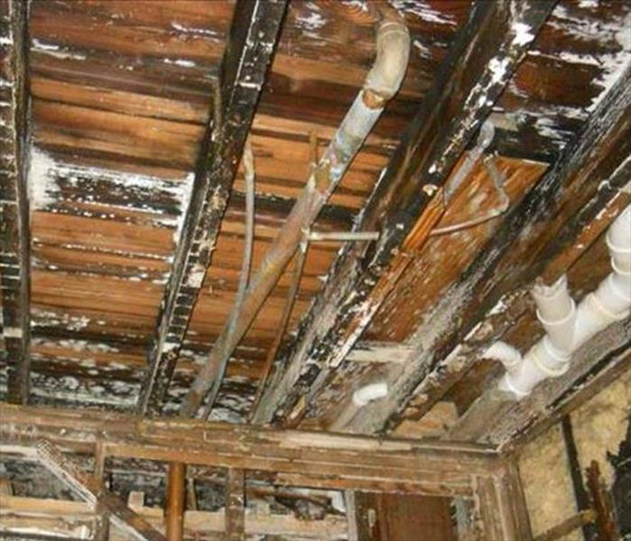 Mold Remediation Needed--Lafayette