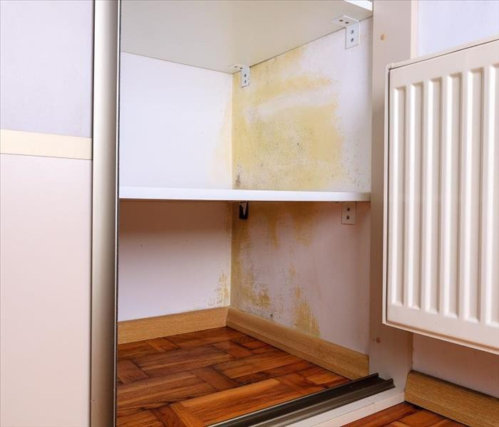 Mold Remediation Controlling the Spread of Mold Damage within Your Battle Ground Home
