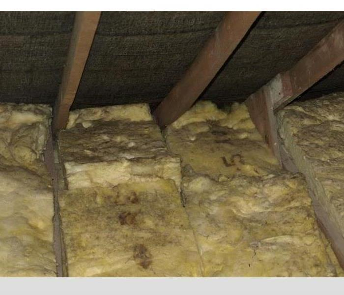 Mold Remediation Vulnerable Roofs Can Lead to Mold Damage in Your Dayton Attic