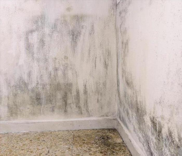 Mold Remediation Lafayette Mold Damage Detection and Remediation Services