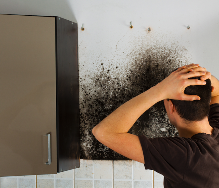 Mold Remediation The Most Effective Way to Tackle Mold Damage in West Lafayette Businesses