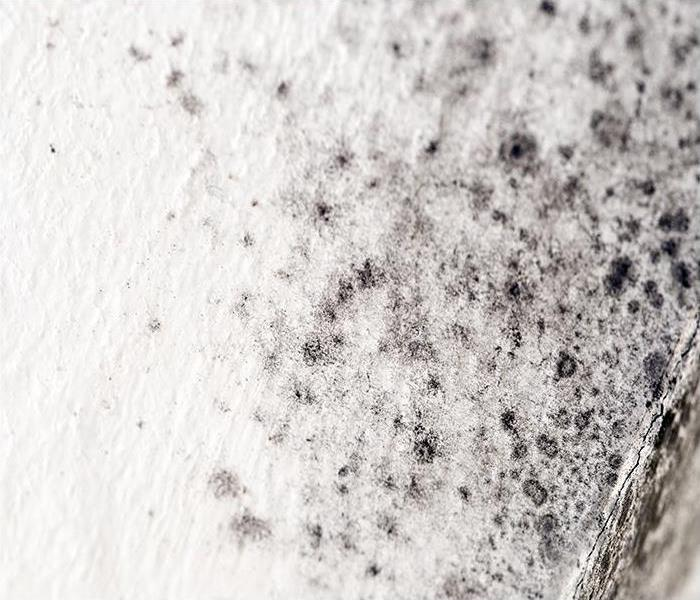 Commercial Routine Mold Damage Inspection And Remediation: An Investment In Your Lafayette Business