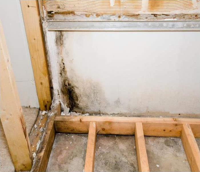 Mold Remediation Here's Why You Should Never Do DIY Mold Removal In Your Dayton Home