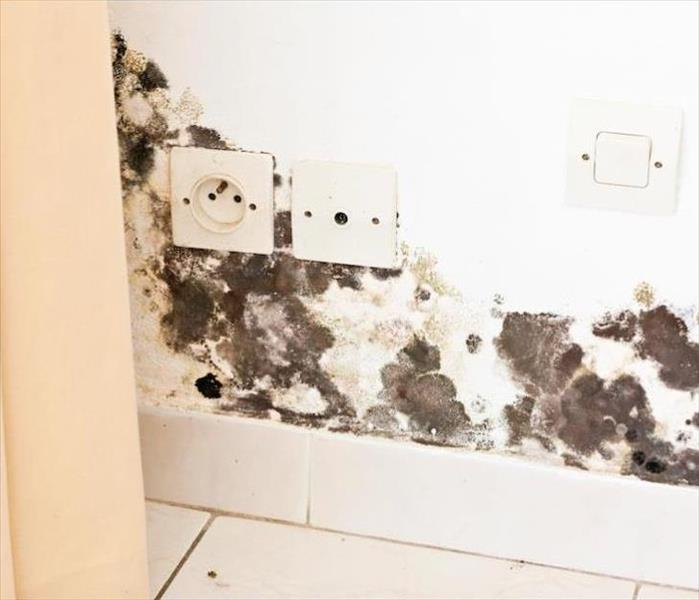 Mold Remediation Mold Damage Remediation in Your Lafayette Home