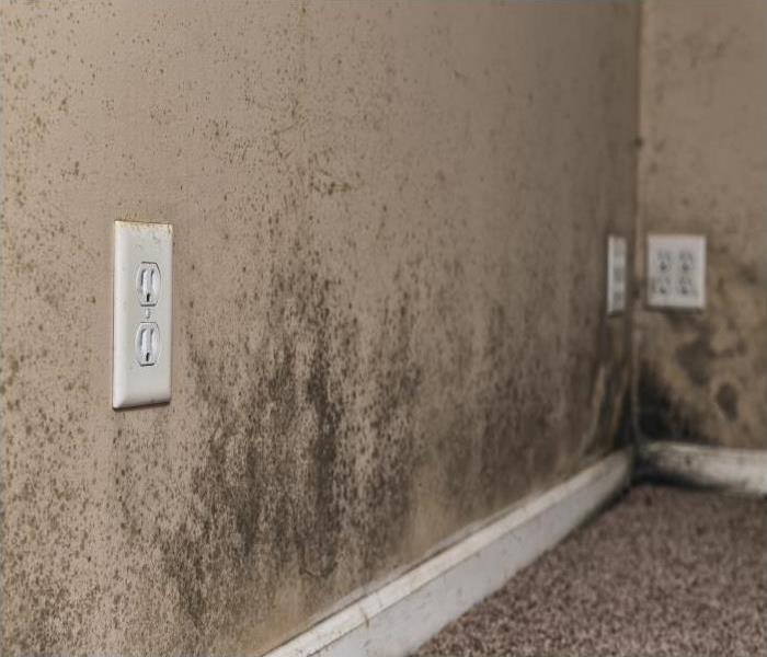 Mold Remediation Our Professionals Explain The Dangers Of Mold Damage In Your Dayton Home